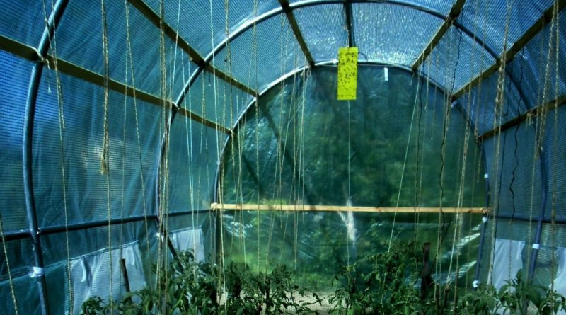 Biologiczna ochrona roślin pod osłonami