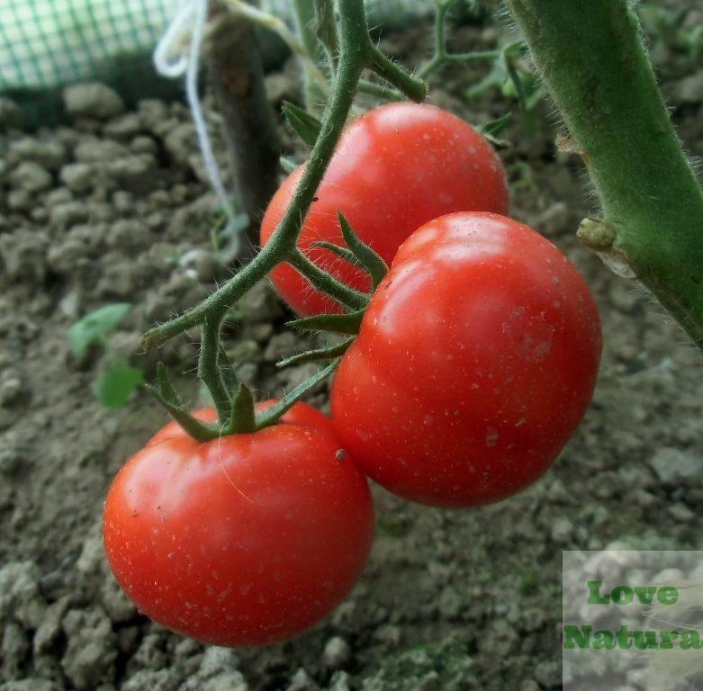 jakie warzywa sadzić obok siebie