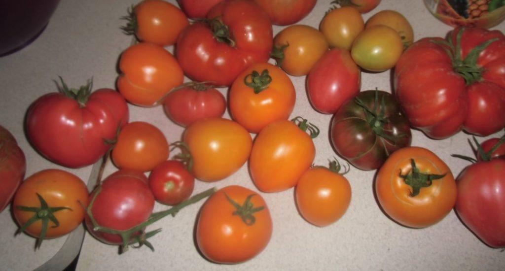właściwości pomidorów