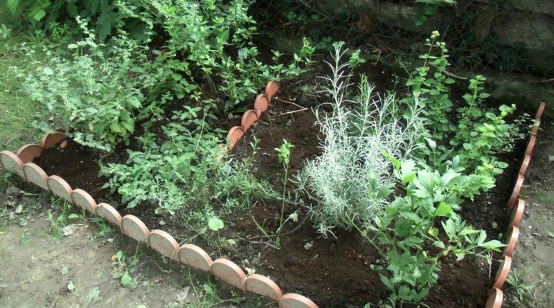 zioła i przyprawy ziołowe