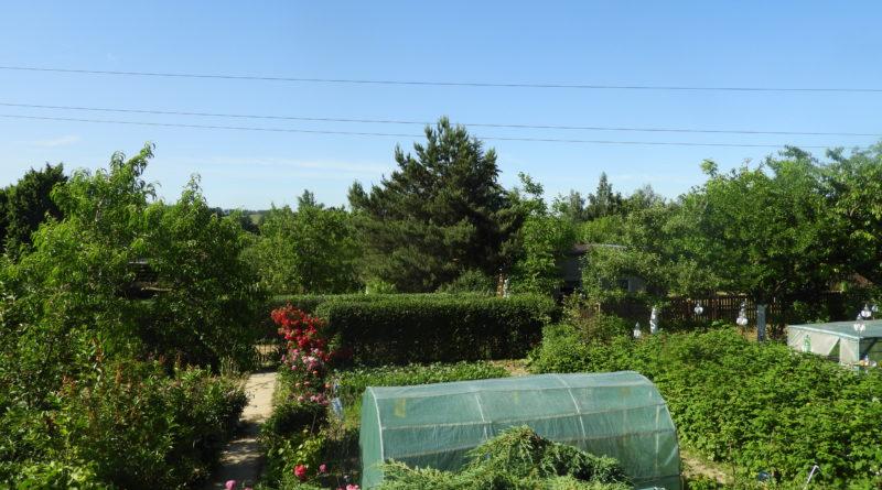 czerwiec w ogrodzie