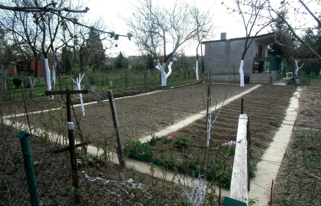 jak zwalczać chwasty w ogrodzie