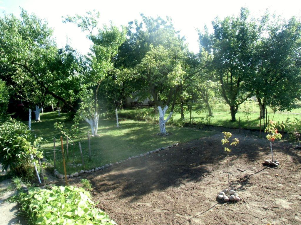 własny ogród