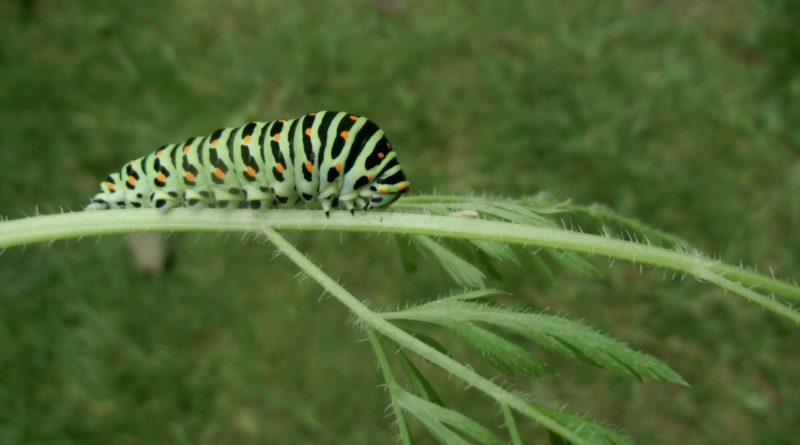 biologiczna ochrona roślin