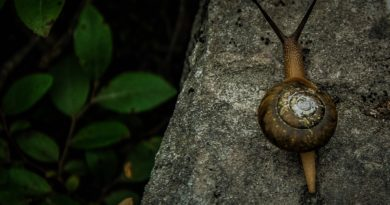 slow life - love natura