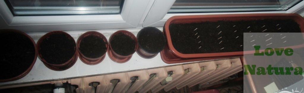 uprawa pomidorów w gruncie