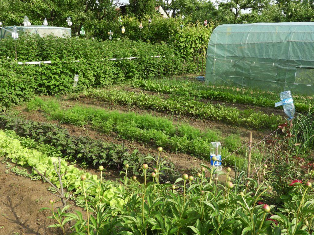 ekologiczne zwalczanie mszyc w ogrodzie
