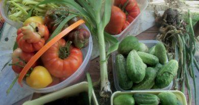 na co zwrócić uwagę kupując owoce i warzywa