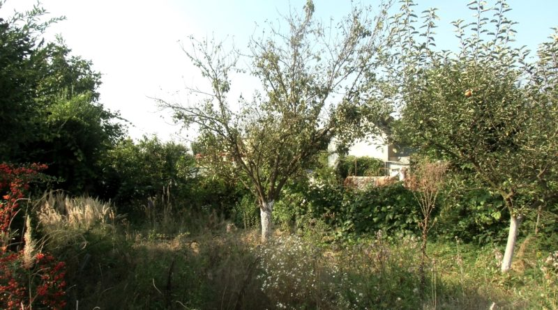 jak zwalczać chwasty w ogrodzie?