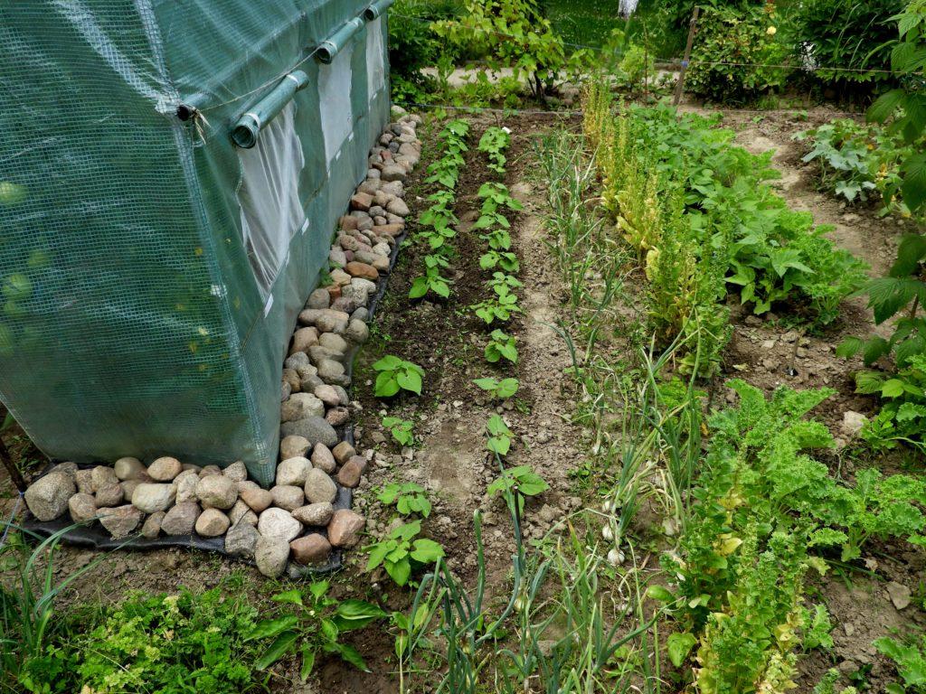 nornice w ogrodzie