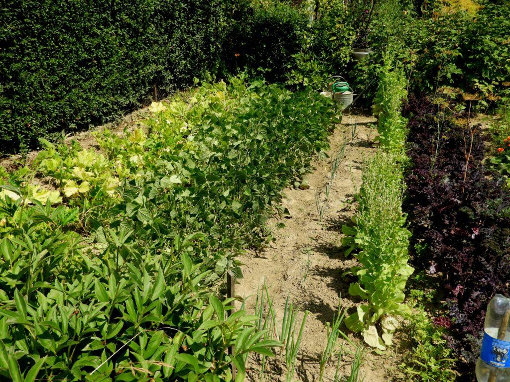 ekologiczna uprawa warzyw