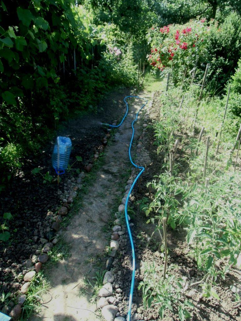 jak podlewać rośliny