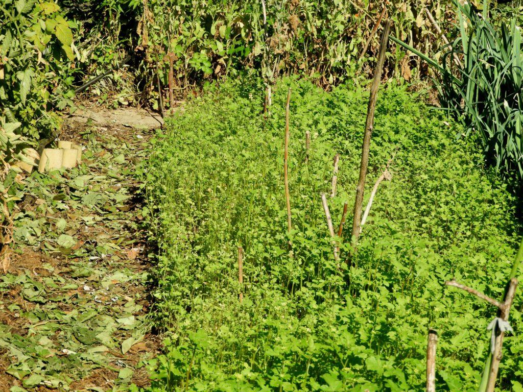 naturalne nawozy organiczne
