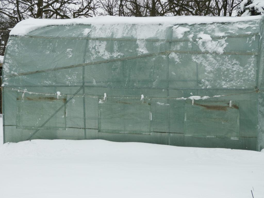 tunel foliowy przed zimą