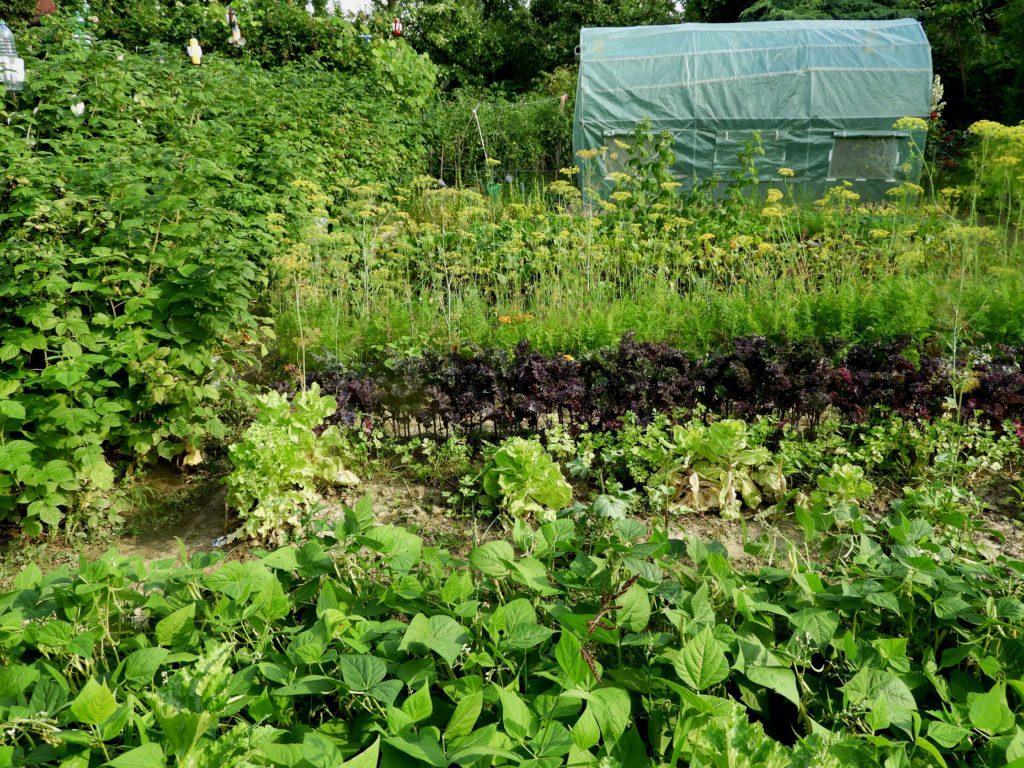 zaniedbany ogródek działkowy
