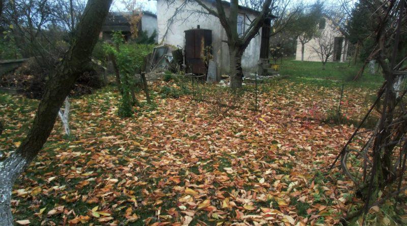 co zrobić z liśćmi w ogrodzie