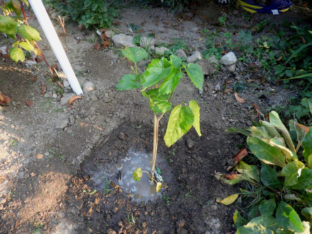zakup drzew i krzewów owocowych