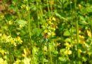 apiterapia produkty pszczele