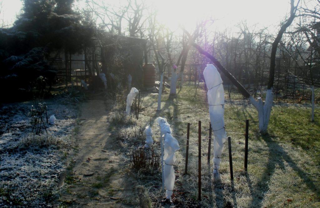grudzień w ogrodzie