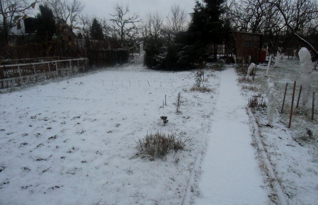 styczeń w ogrodzie