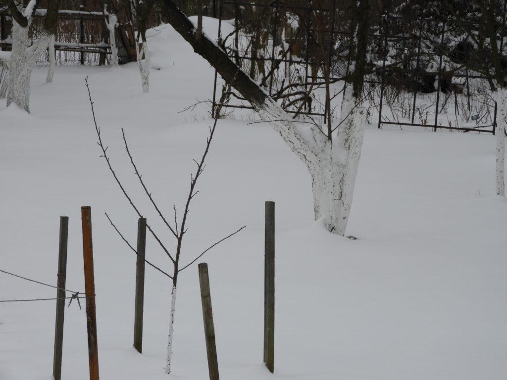 trawnik zimą