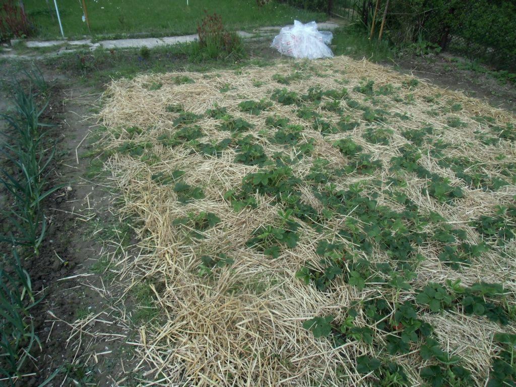 ściółkowanie gleby