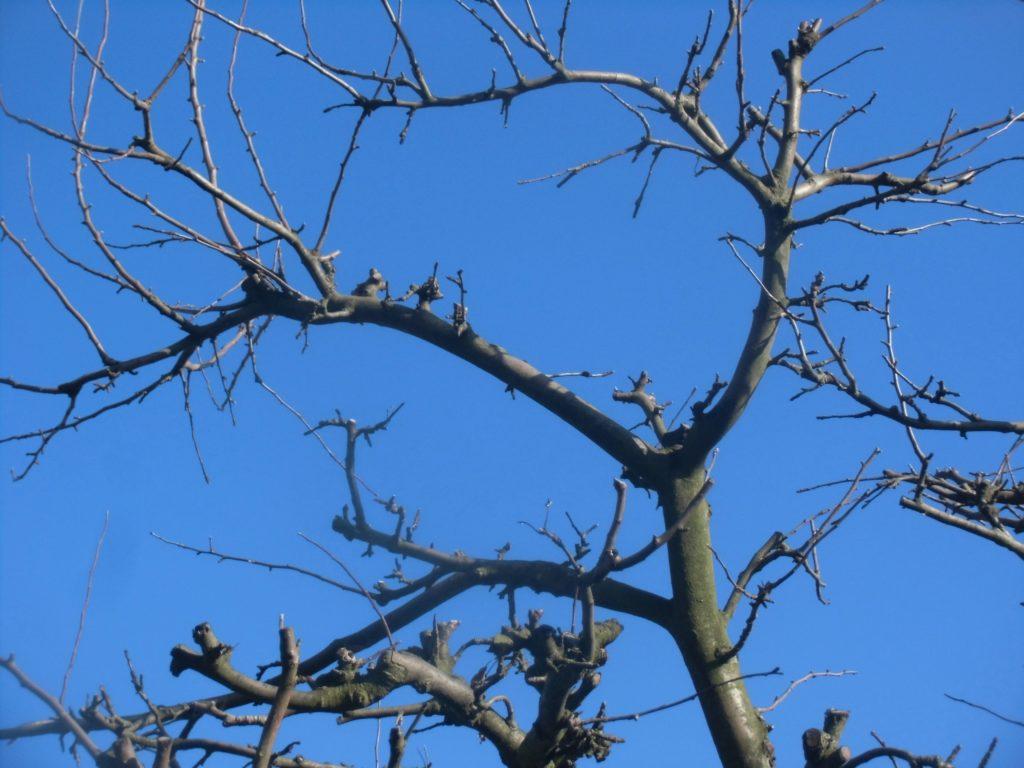 zimowe cięcie drzew