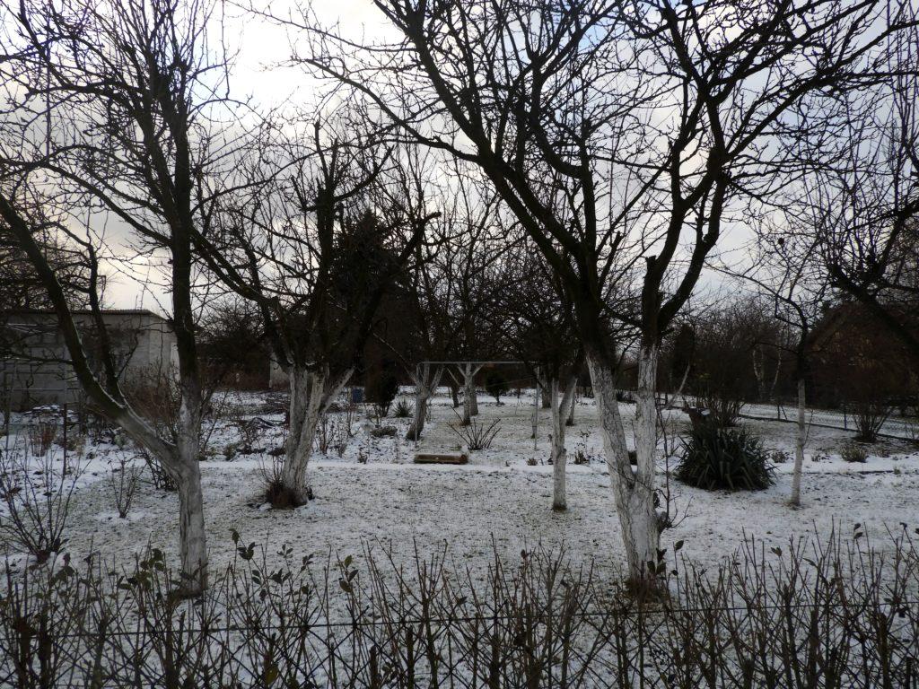 zimowe lustracje w ogrodzie