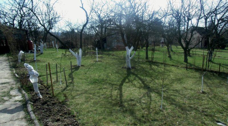 marzec w ogrodzie