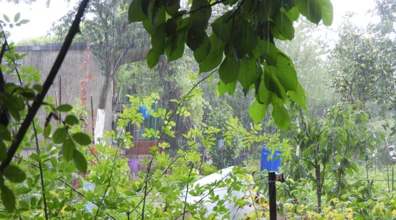 wpływ pogody na rozwój chorób roślin