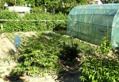 maj w ogrodzie