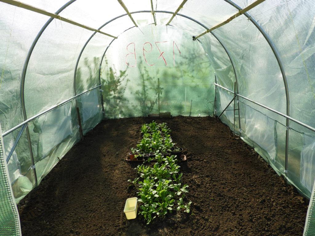 pielęgnacja gleby w tunelu foliowym