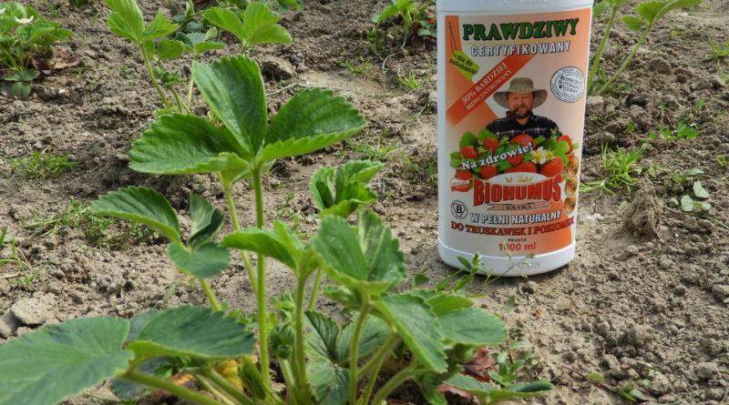 biohumus extra do truskawek