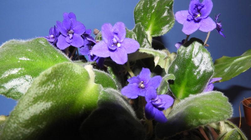 jak dbać o rośliny doniczkowe