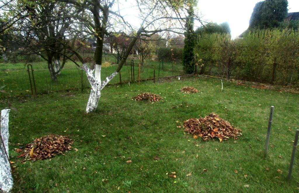 liście w ogrodzie