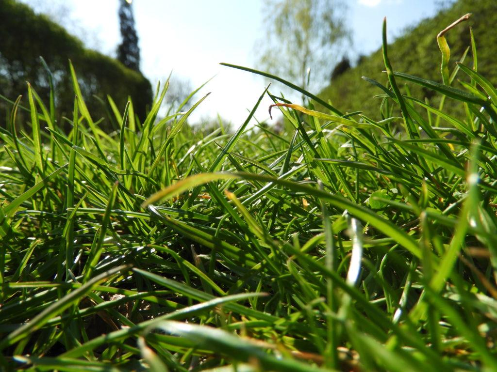 mech w ogrodzie