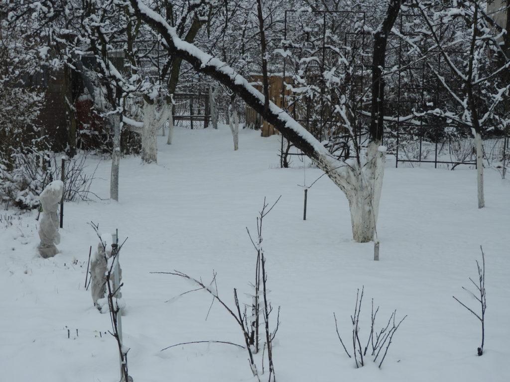 pielęgnacja trawnika po zimie
