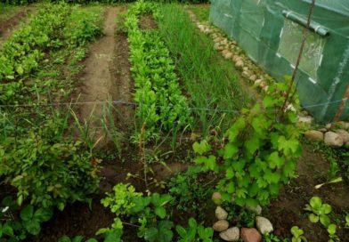 ekologiczne nawożenie warzyw