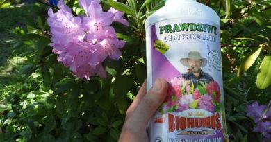 testowanie produktu biohumus extra rododendron