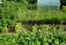 jak ekologicznie poprawić plonowanie
