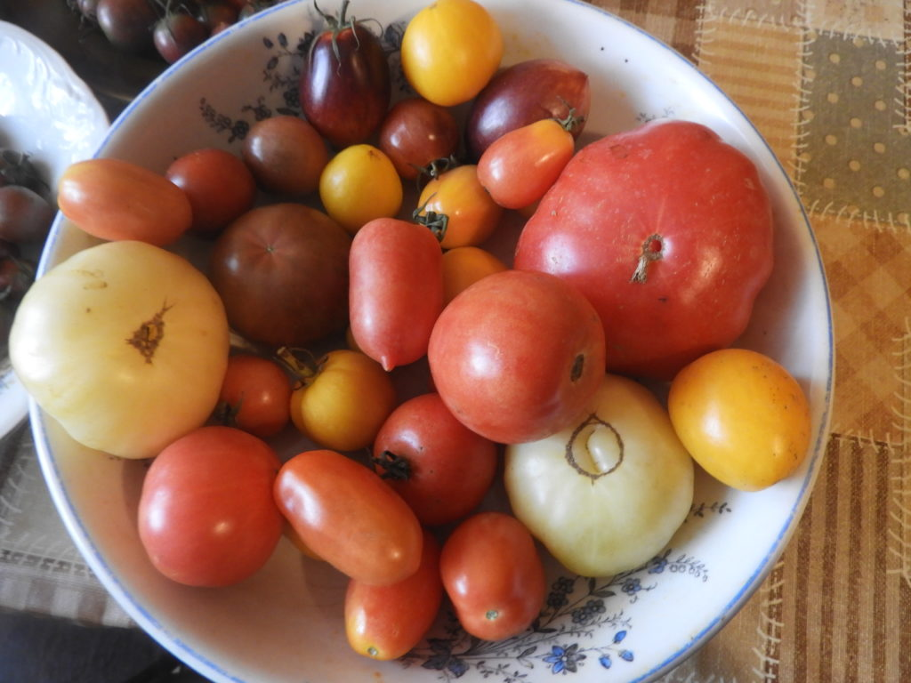 Dojrzałe pomidory w zimie