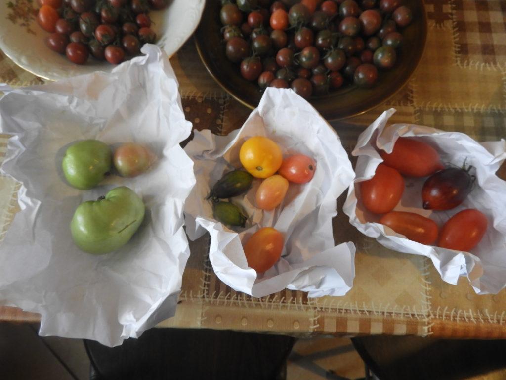 co zrobić żeby zielone pomidory dojrzały w domu