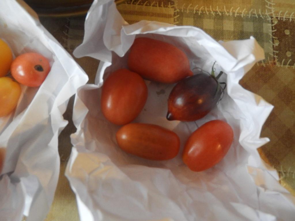 czy zielone pomidory dojrzewają po zerwaniu