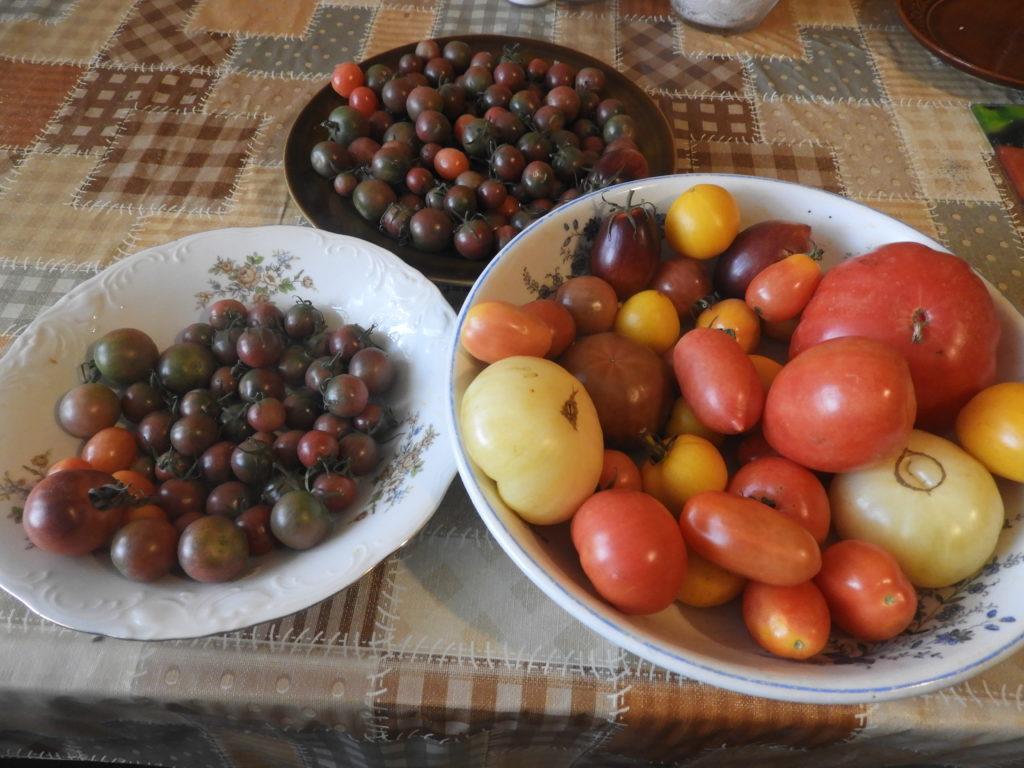 jak przechowywać pomidory w domu, by dojrzały