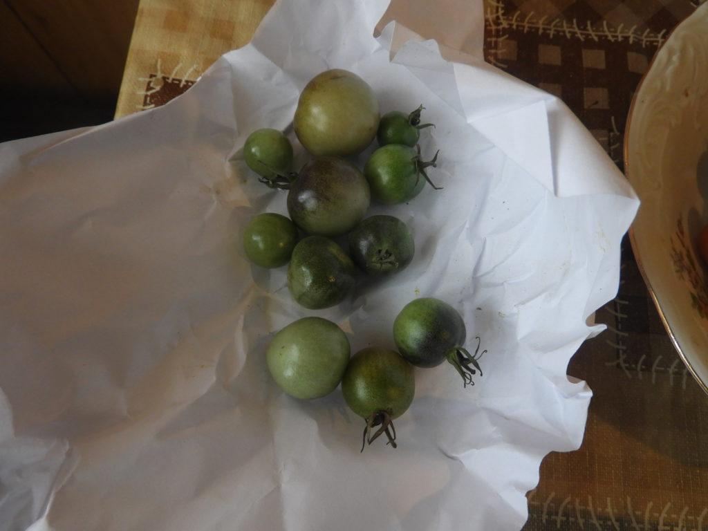 jak przechowywać zielone pomidory