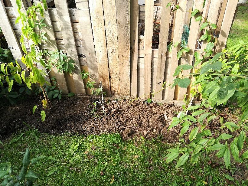 jesienne nawożenie kompostem krzewów