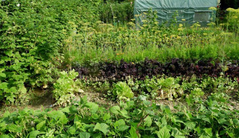 mączka bazaltowa w ogrodzie