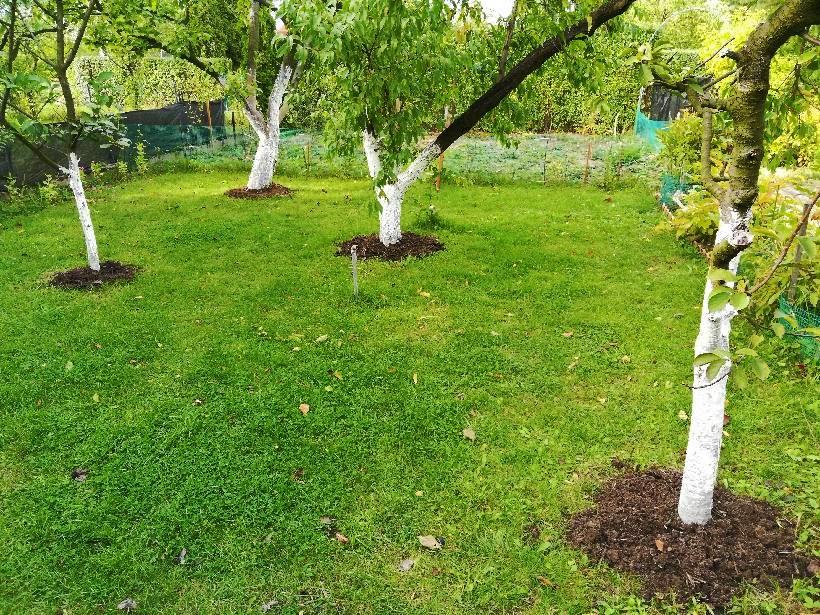 nawożenie kompostem jesienią