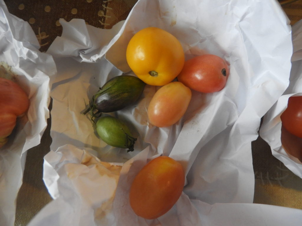 sposób na niedojrzałe pomidory