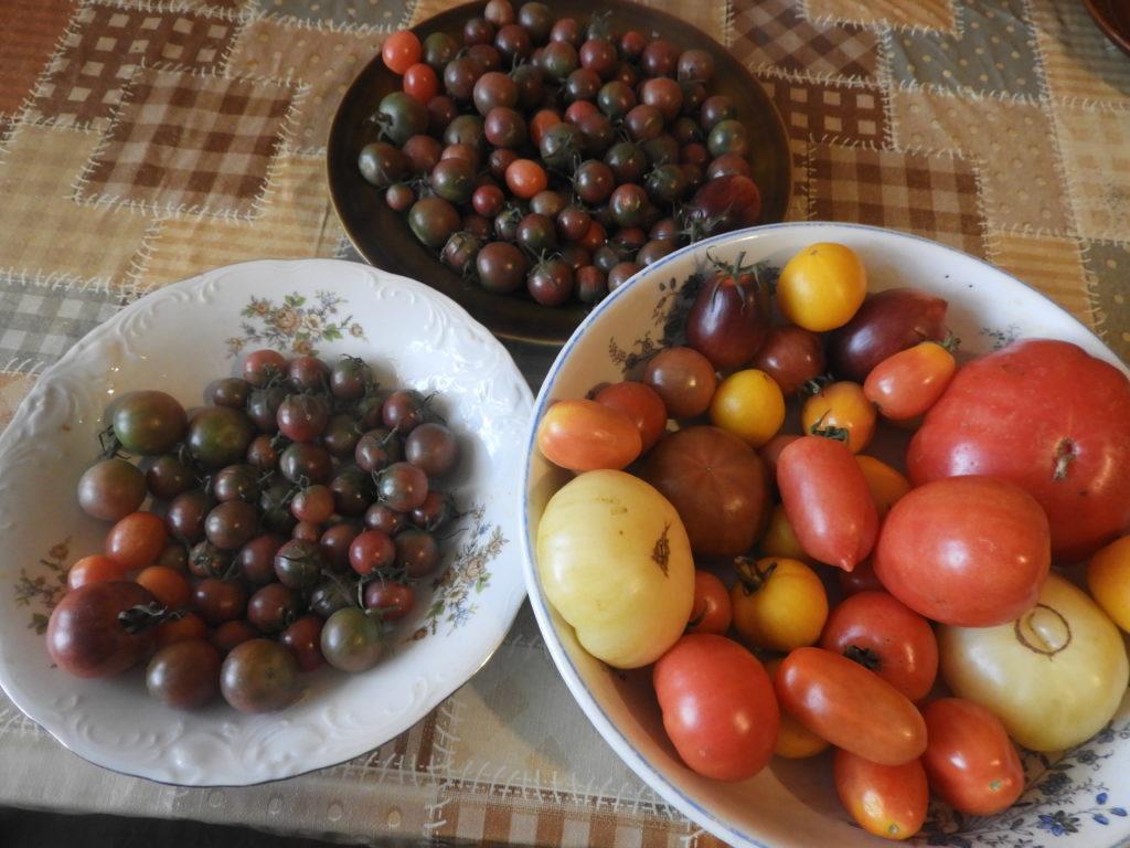 własne pomidory po sezonie